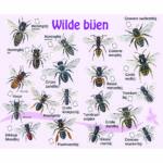 Verhaal over bijen